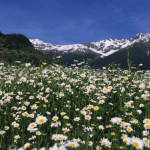 Primavera in Val di Sole